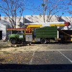 Tree Service Springdale AR 02