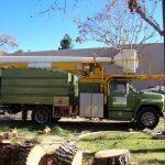 Tree Service Springdale AR 06