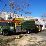 Tree Service Springdale AR 10