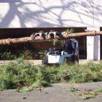 Tree Service Springdale AR 14