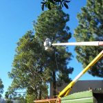 Tree Service Springdale AR 16