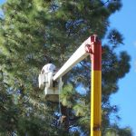 Tree Service Springdale AR 17