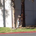 Tree Service Springdale AR 20