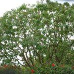 Tree Service Springdale AR 21