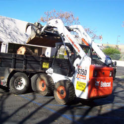 Commercial Tree Service Springdale AR