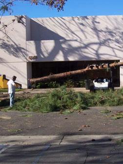 Springdale AR Tree Removal