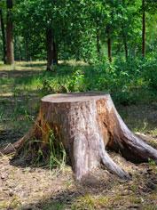 Stump Removal Springdale AR