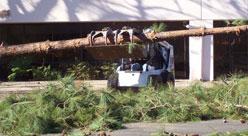 Tree Removal Springdale AR